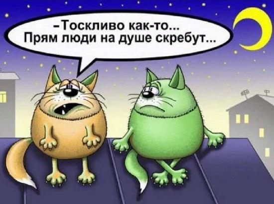 анекдоты про кошку