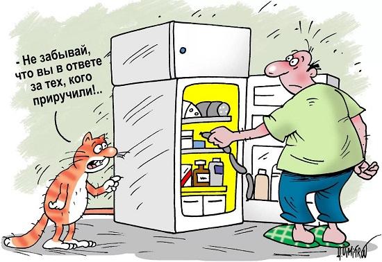 смешные анекдоты про кошек