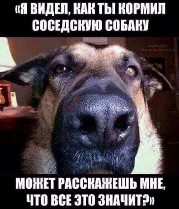 ржачный юморок о собаке
