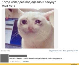 самый ржачный юмор про кота