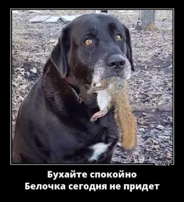 анекдот о животных