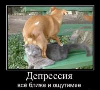 анекдоты про животных ан
