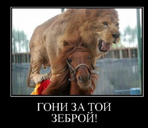 анекдот о львах