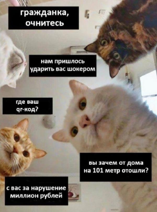 анекдоты про карантин АН