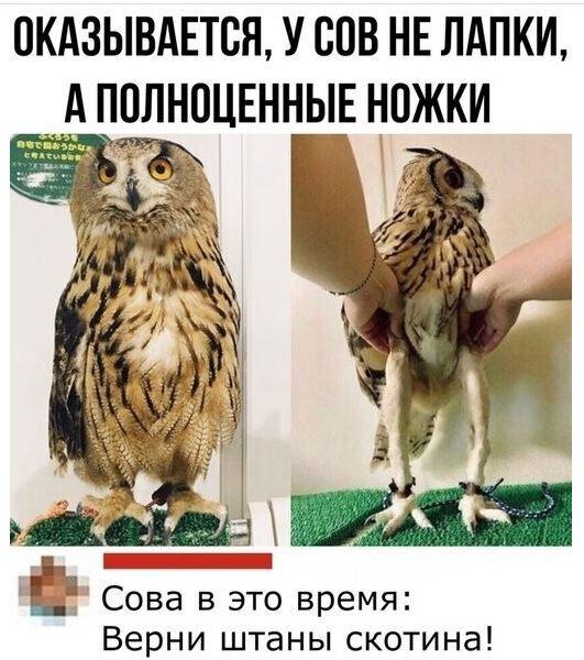 картинки мемы приколы с надписями (26)