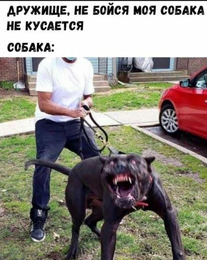 картинки мемы приколы с надписями (3)