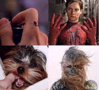 картинки мемы приколы с надписями (9)