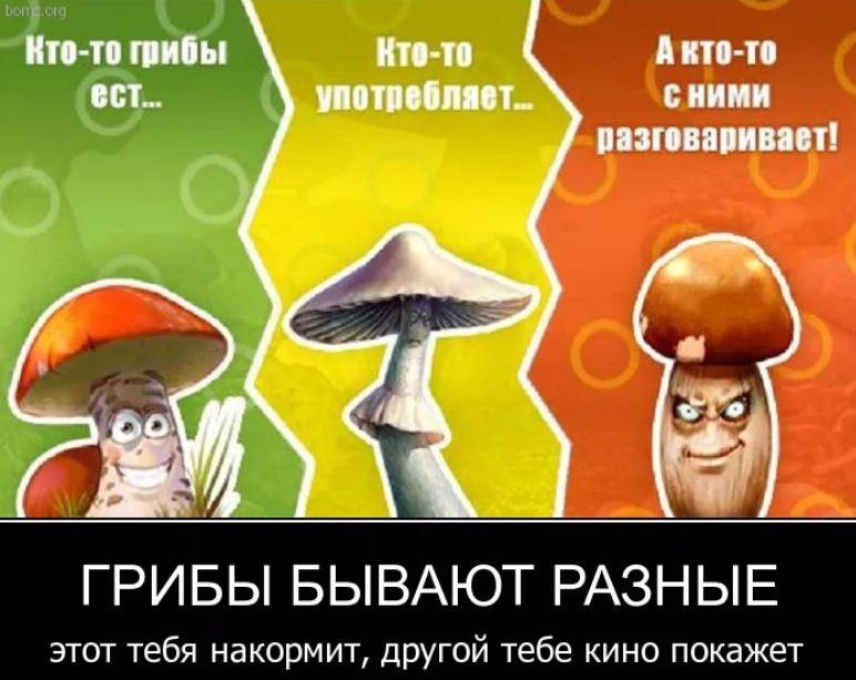 смешные картинки с надписями (6)